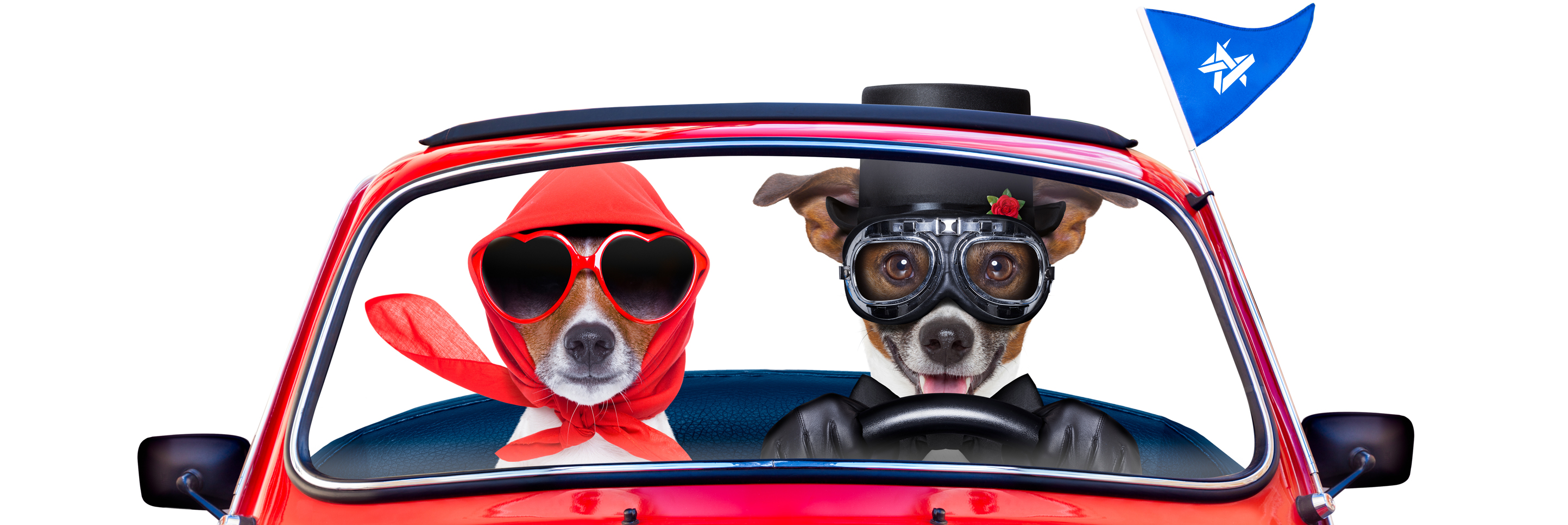 Picture of dogs driving a car